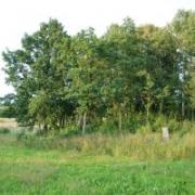 Kivylių piliakalnis