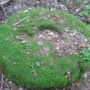 Budrių akmuo su dubeniu